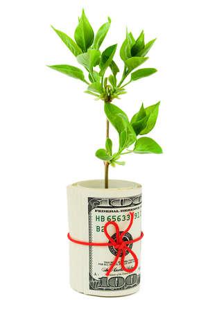 Rolle der Geld-und Pflanze isoliert auf wei�em Hintergrund Lizenzfreie Bilder