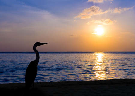 Heron on a tropical beach, sunset - nature background