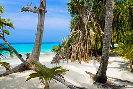 Trees on tropical beach - abstract nature background photo
