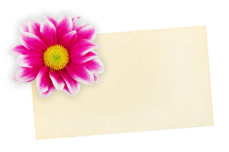 Greeting paper card and flower isolated on white background photo