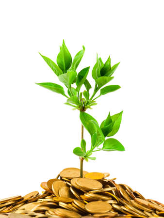 creative money: Coins and plant isolated on white background