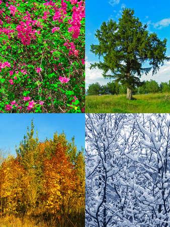 Four seasons (my photos) - nature background Stock Photo - 4965622