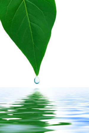 Leaf and water drop isolated on white background photo