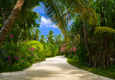 trailway: Pathway in tropical park - abstract travel background