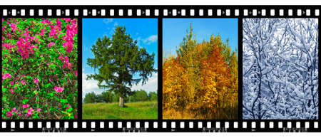Nature seasons in film frames (my photos) isolated on white background photo