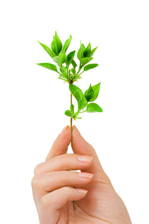 Hand with plant isolated on white background Stock Photo - 5180902