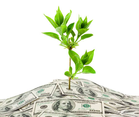 loans: Money and plant isolated on white background