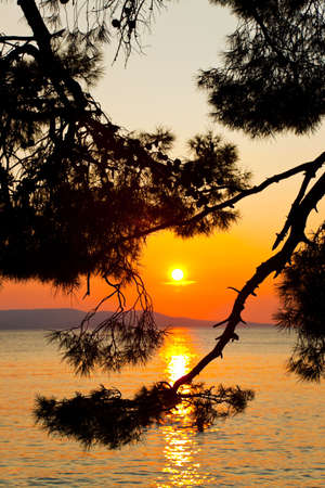 Pine tree branch and sunset - nature vacations background photo