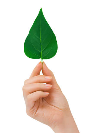 Hand with leaf isolated on white background Stock Photo - 5702322