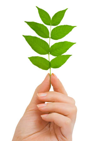 Hand with plant isolated on white background Stock Photo - 6102520