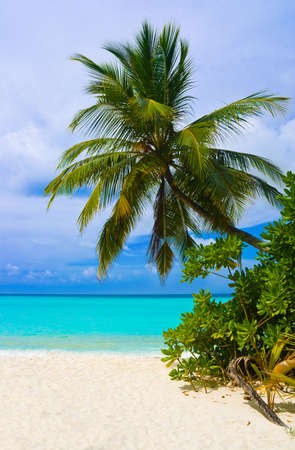 Bending palm tree on tropical beach - vacation background photo