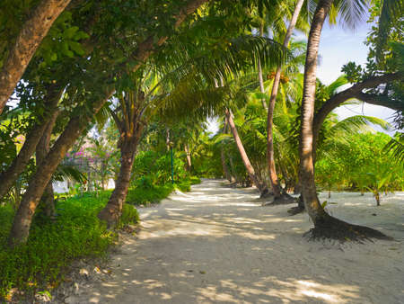 path cottage garden: Bungalows on beach and sand pathway, flowers and trees Stock Photo