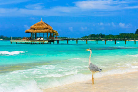 Heron on a tropical beach - nature background Stock Photo - 6696045