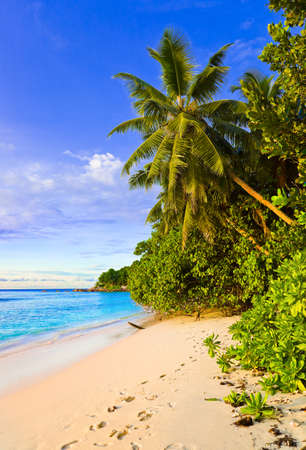 Palms on tropical beach - nature background photo