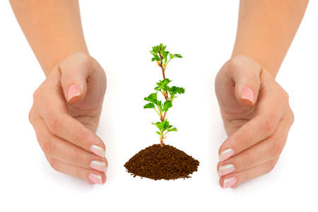 Hands and plant isolated on white background Stock Photo - 7084338