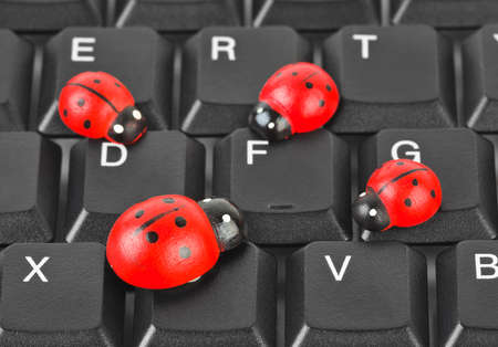 Toy ladybirds on computer keyboard - concept technology background photo