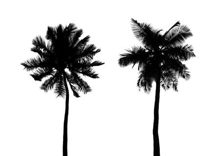 Silhouette of palms isolated on white background photo