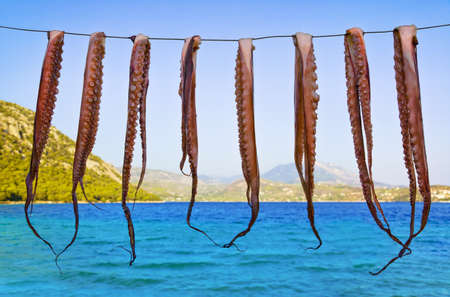 calamares: Octopus hanging to dry - seafood fishing background