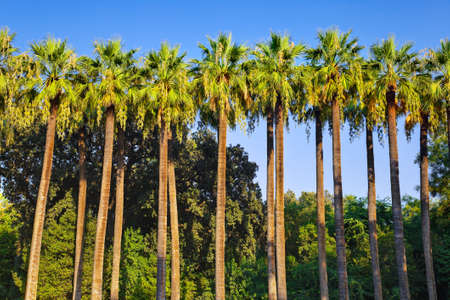 Palms - tropical landscape - vacation background photo
