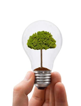 crecimiento planta: Mano con luz y �rboles aislados sobre fondo blanco  Foto de archivo