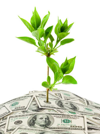 creative money: Money and plant isolated on white background
