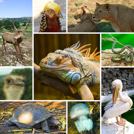 Collage of animals images - nature background (my photos) photo
