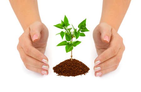 Hands and plant isolated on white background photo