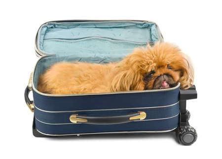 Dog in travel case isolated on white background photo
