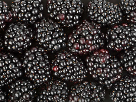 blackberry fruit: Group of blackberry - abstract food background Stock Photo