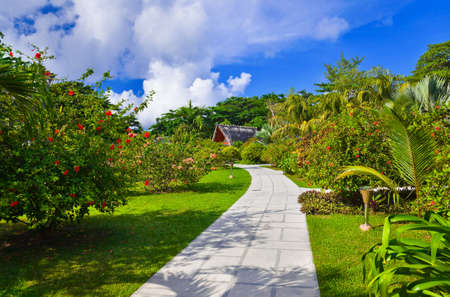 Pathway in tropical park - abstract travel background photo