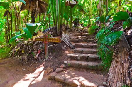 mai: Pathway in jungle, Vallee de Mai, Seychelles - travel background Stock Photo