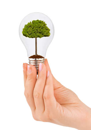 think safety: Hand with lamp and tree isolated on white background Stock Photo