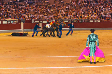 Matador and dead bull in corrida at Madrid Spain Stock Photo - 12972559