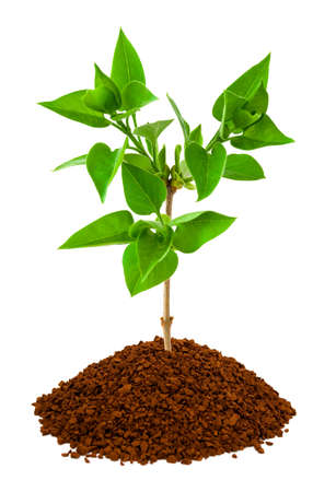 land plant: Plant in land isolated on white background Stock Photo