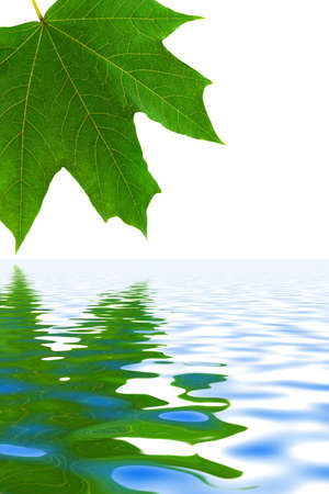 Leaf and water isolated on white background photo