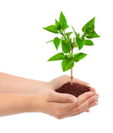 Les mains et les plantes isolées sur fond blanc