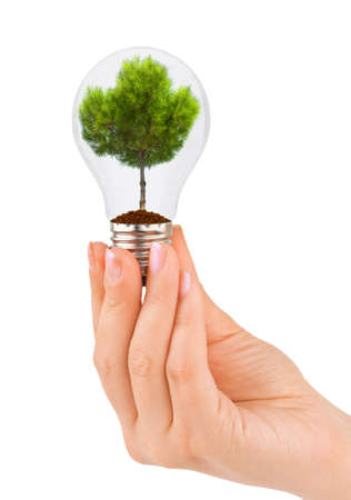 Hand with lamp and tree isolated on white background Stock Photo