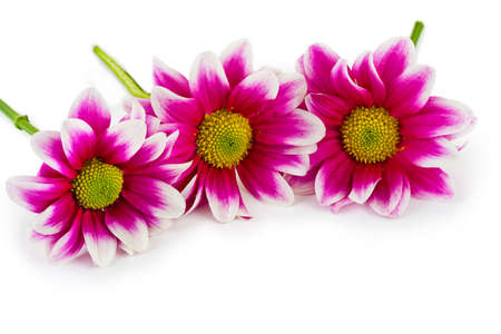Three flowers - isolated on white background photo