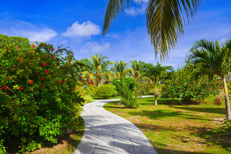 Pathway in tropical park - abstract travel background Stock Photo - 18069798