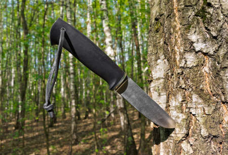 Knife stuck into a tree in forest Фото со стока