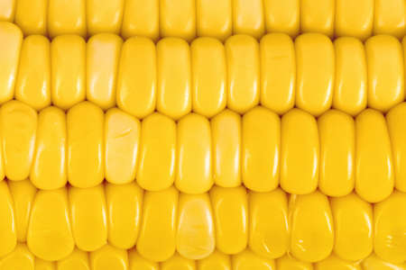 Ear of corn - food background