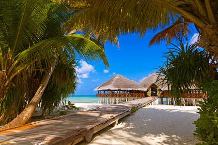 Café en la isla tropical de Maldivas - fondo de viajes de la naturaleza Foto de archivo