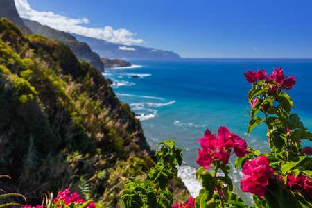 Kwiaty na wybrzeżu w Boaventura - Madera Portugalia - tło podróży