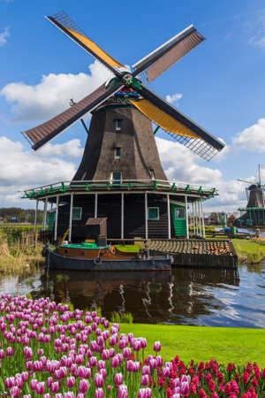 風車とオランダの建築背景の花
