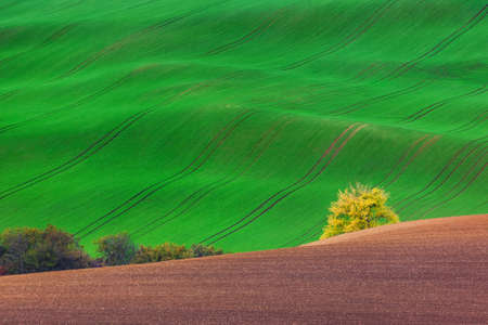 Famous moravian fields - Czech Republic - nature and travel background