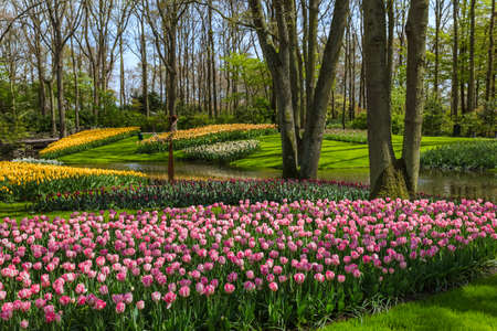 Flowers in garden Keukenhof Netherlands - nature background