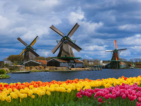 Windmills and flowers in Netherlands - architecture background 免版税图像 - 96554970