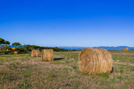 Hay Bales on a field in the Tuscany Italy - nature background 版權商用圖片