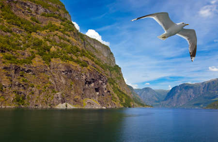 Fjord Naeroyfjord in Norway  nature and travel background Фото со стока
