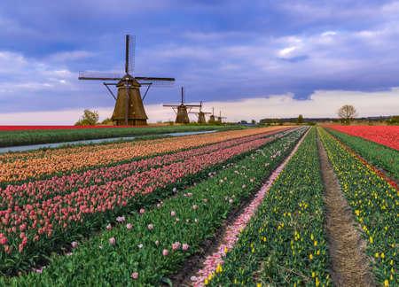 Molinos de viento y flores en Holanda - fondo de arquitectura Foto de archivo